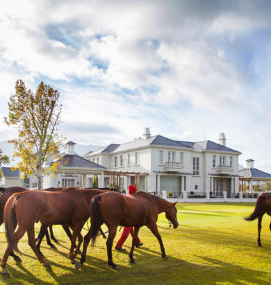 Golfreisen: Pear Valley Hotel Südafrika